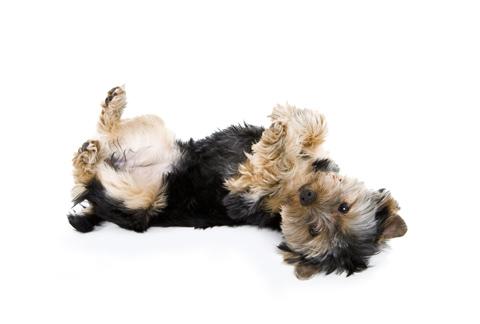 pets-lehti-koira
